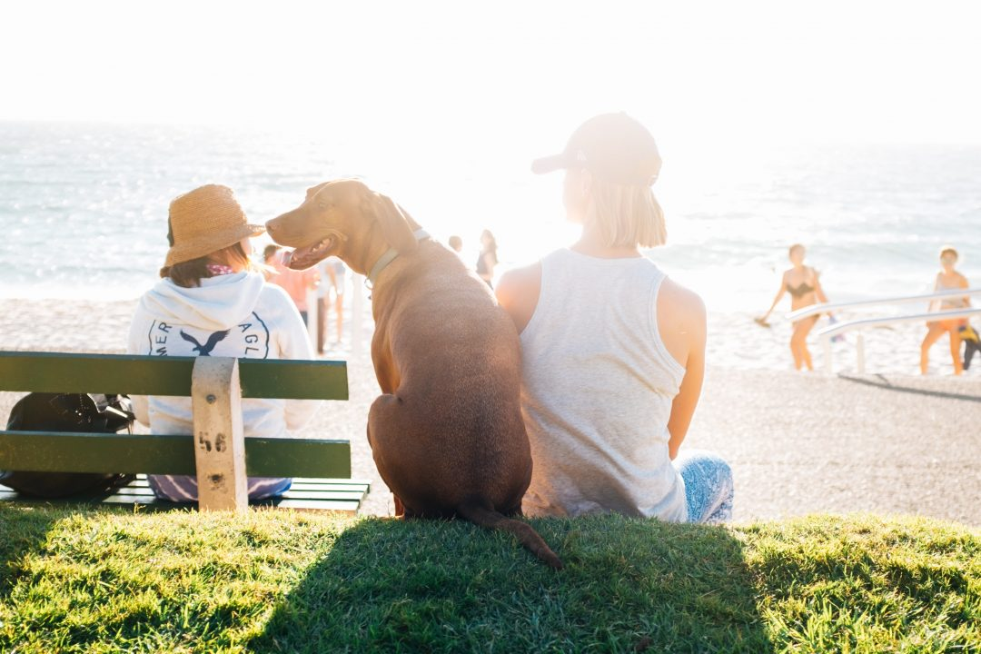 Woman sitting near the beach with her short-coat brown dog by her side
